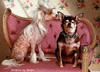 Honden krabbels
