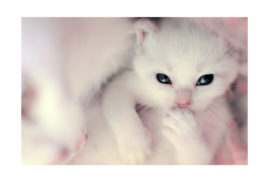 Katten krabbels