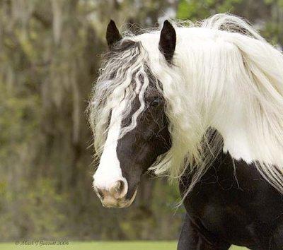 Paarden krabbels