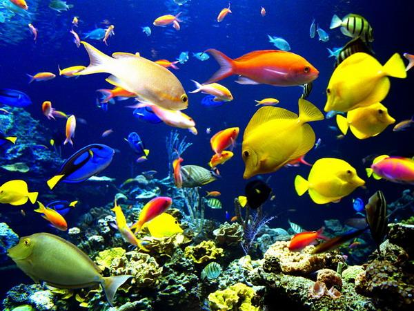 Walvissen Bevolken Zee Biologie Biologie Amp Plantkunde