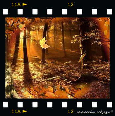 Herfst krabbels